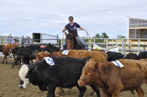Team Penning and Ranch Sorting on Show Me