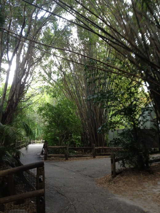 The Asian walkway is lined with tall, willowy bamboo trees.  As the wind blows through the branches you can hear them singing.