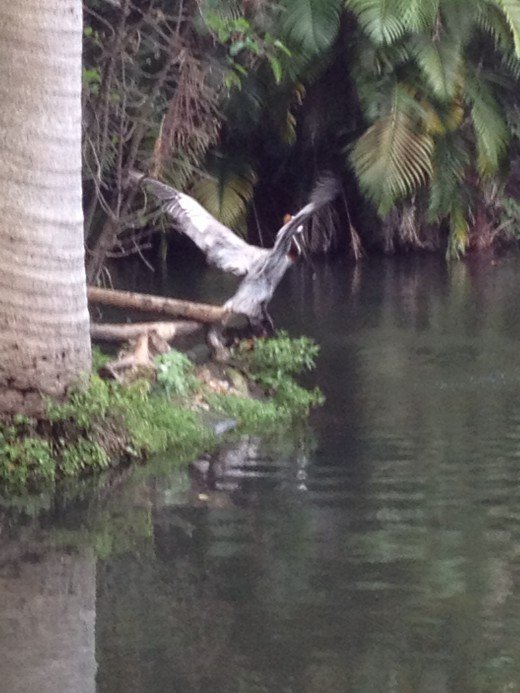 The Florida wetlands is home to some of the most beautiful birds. This flight reminds me of a scene from Jurassic Park.
