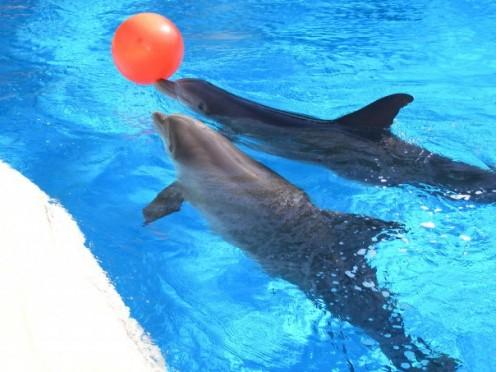 Dolphins at the Dolphin Habitat.