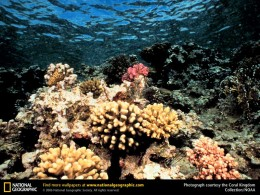 Dying Coral Reef (note the white color) - Coral is killed by chemicals and water heating up.