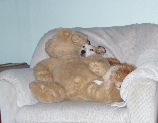 A cuddle for teddy