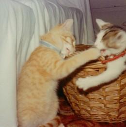 Battling kittens - Spotty holding her own against Spike.