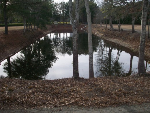 Wally's pond
