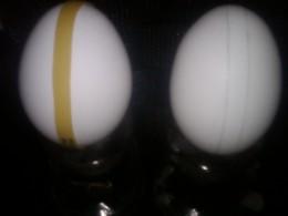 Left side: elastic on egg. Right side:  pencil lines on egg