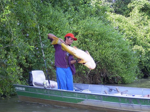 Fisherman with a big catfish in the Pantanal, Brazil