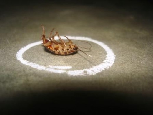 Isn't it fascinating why cockroaches flip over when they die?