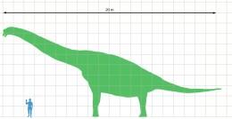 Brachiosaurus human size comparison