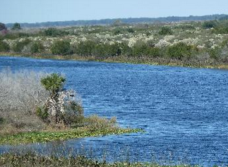 The Kissimmee River