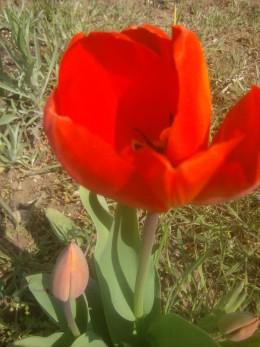Another springtime latecomer