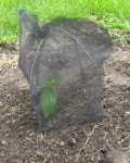 How to Protect Individual Young Garden Plants from Deer and Rabbits