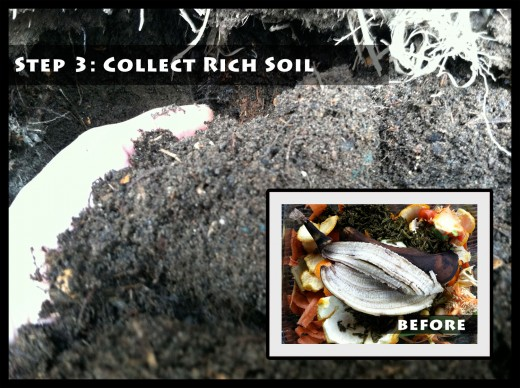 Step 3: Collect Rich Soil