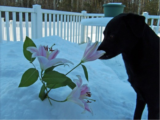 Hmm..is that a flower...shouldn't be here?