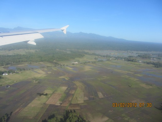 The rice fields that surround the runway