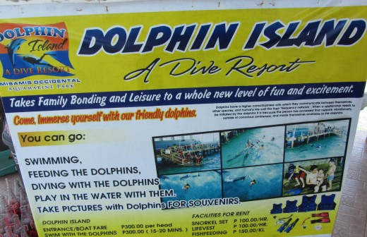 Dolphin Island swimming with the dolphin rates