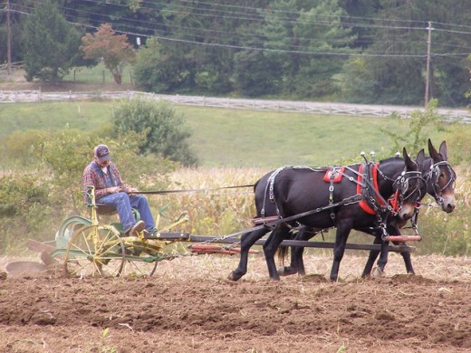 FARMING WAS ONCE A GOOD AND NOBLE JOB PERFORMED BY ONE MAN AND HIS TEAM OF MULES.
