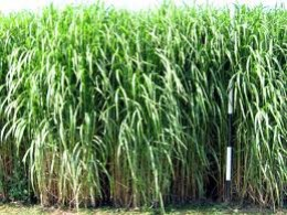 Tegra Aims to Increase Yield of Crops