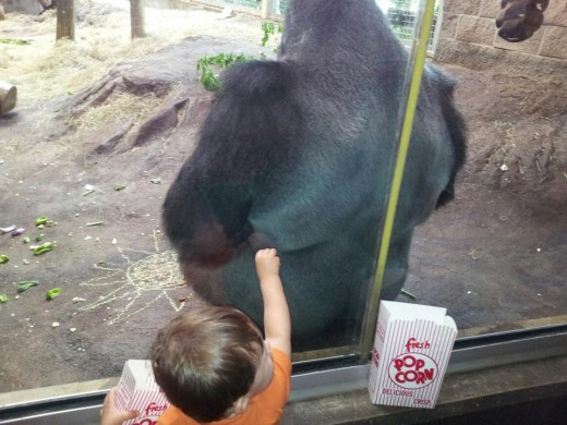 """Monkey? Want some popcorn?"""