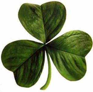 shamrock( a plant with three leaves on one stem)