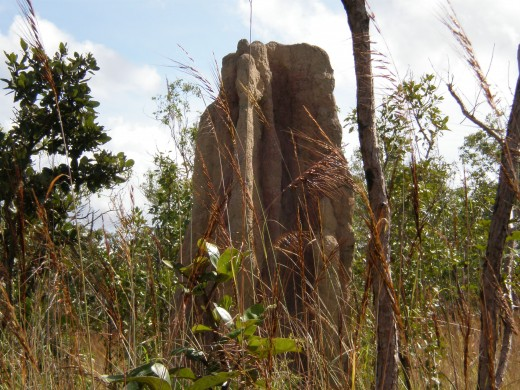 Huge termite mound, Litchfield National Park, Northern Territory, Australia.