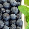 Why Eat Blueberries? Nutrition and Health Benefits of the Blueberry