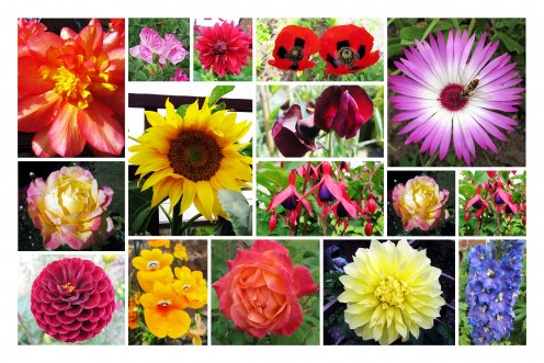 Movie Masters 2012 Calendar of Flowers
