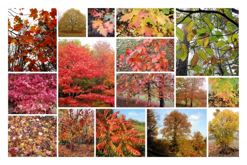 Autumn Hubs