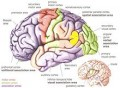 Aphasia Symptoms Causes and Treatment