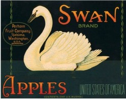free cross stitch pattern SwanApples