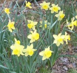 First signs of spring and renewal . . .