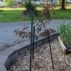 Money Saving Organic Mulches