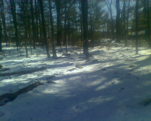 Wooded Labyrinth with a fresh carpet of glittering snow.