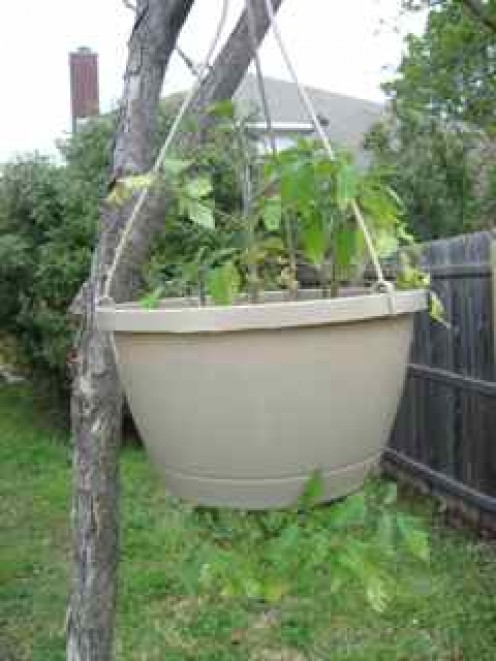 Top and bottom hanging planter.