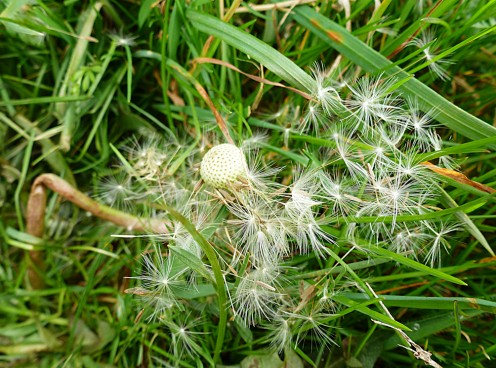 The Seed Heads