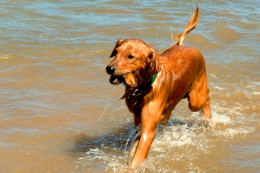 Make sure your dog doesn't have allergies before taking him out for a swim!