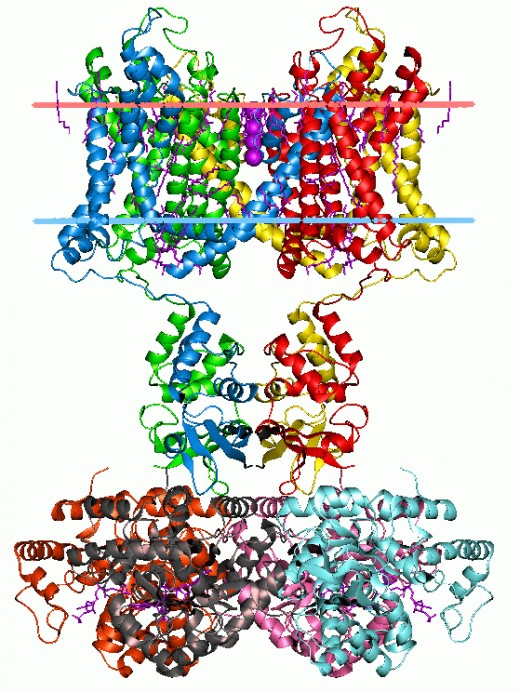 Image 7;  Membrane Protein---potassium channel. Author is Andrei Lomize.