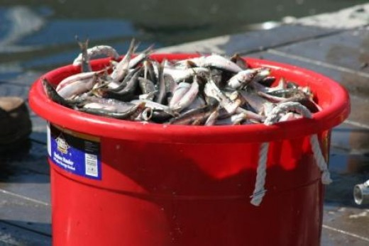 Buckets can be filled with dead fish