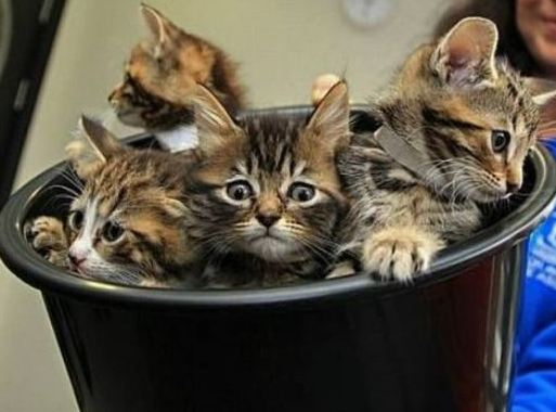 Buckets can be filled with kittens