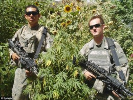 U.S. Troops 'Guard' Marijuana Plants