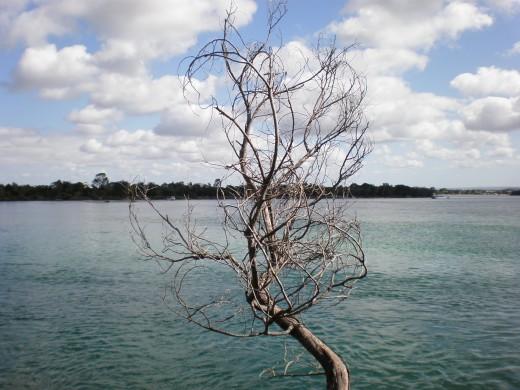 Noosa Heads, Queensland, Australia.