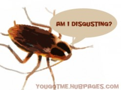 Roach Facts: Why Do Cockroaches Die on Their Backs and More