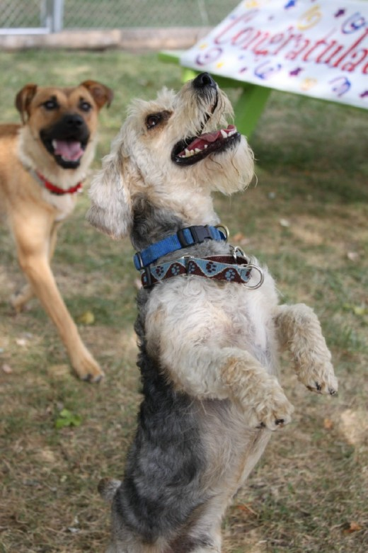 Happy dog graduates of Project Second Chance