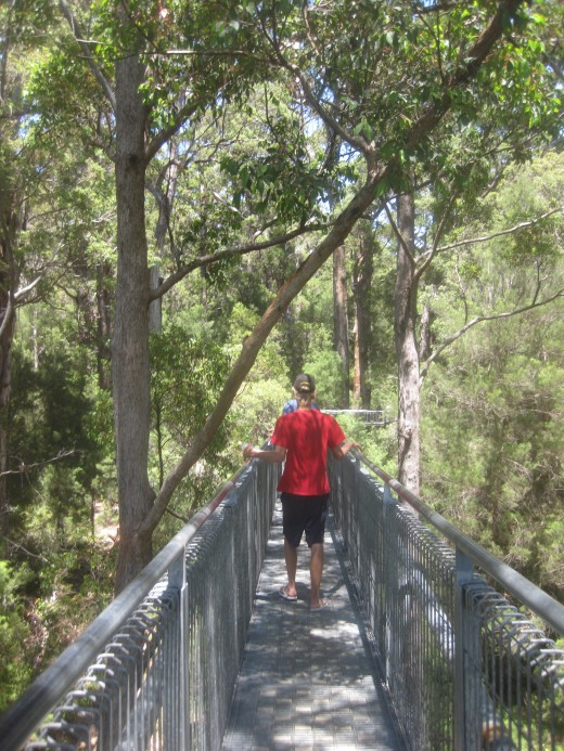 The boy entered the 'Valley of the Giants' and followed the 'Ancient Empire' boardwalk and rammed earth trail over the forest floor.