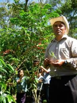 Coffee plants, also called coffee trees, can grow to be 20 feet tall (about 7 meters high)!