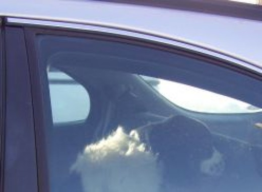 Dog left in car.