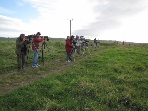 These twitchers are observing a sandhill crane in Southern England. Sandhill's are native to North America and parts of Siberia.