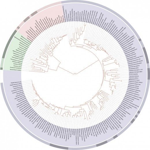 Mapping of the Tree of Life based on sequenced genomes. Eukaryotes are pink, archaea are green, and bacteria are blue.