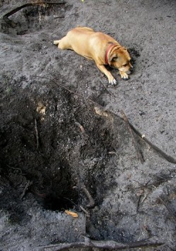 Do your dogs love to dig holes and any ideas on how to stop them in a humane way?