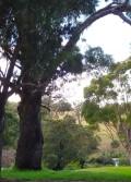 Nyerimilang Heritage Park, Gippsland, Victoria