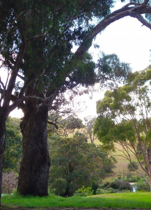 Nyerimilang Bushland